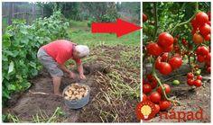 Predkovia majú v talóne perfektné rady pre vašu záhradu, ktoré sa oplatí poznať aj dnes. Poriadia vám napríklad aj to, ako využiť veci, o ktorých ste si mysleli, že sú vo vašej záhradke problémom!  Krtinec sa