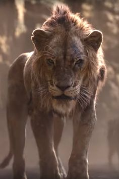 The new trailer for the live-action 'Lion King' movie gives fans a glimpse of Scar and shows Timon and Pumbaa singing Lion King Remake, Lion King Movie, Disney Lion King, Disney Villains, Disney Movies, Cgi, Scar Lion King, The Lion King, The Lion Sleeps Tonight