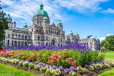 Beautiful view of historic parliament building in the citycenter of Victoria with colorful flowers on a sunny day, Vancouver Island, British Columbia, Canada Working Holiday Visa, Working Holidays, Vancouver Hotels, Vancouver Island, Day Trips From Seattle, Victoria British Columbia, Restaurants, Victoria Island, Train Tour