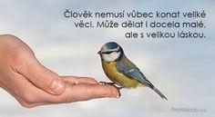 Humor, Motto, Wisdom, Sayings, Words, Quotes, Quotations, Lyrics, Humour