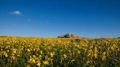 Mykonos, Vineyard, Mountains, Nature, Travel, Outdoor, Outdoors, Naturaleza, Viajes