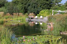 Swimming Pond, summer's day, watching the dragon flies Ellicar Gardens