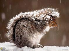 """しっぽを使って""""雪宿り"""""""