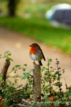 Hedges often provide food, shelter, and a nest site for garden birds. Big Garden Birdwatch, Garden Birds, Hedges, Bird Feeders, Markers, Shelter, Watercolor Paintings, Nest, Garden Design
