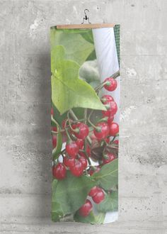 Modal Scarf: Berry & Ivy. Photo taken in Dubuque, Ia