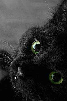 Black Cat. Love those green eyes.