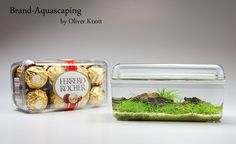 The eccentric German aquascaper, Oliver Knott strikes again — now in a candy box.