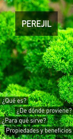 Perejil : propiedades, beneficios para la salud, efectos secundarios y dosis recomendada Natural Medicine, Herbal Medicine, Fruit Benefits, Herb Seeds, Nutribullet, Medicinal Plants, Healthy Tips, Natural Remedies, Herbalism