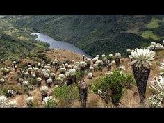 Por Qué Conservar el Páramo de Ocetá -  Monguí - Boyacá - TvAgro por Jua...
