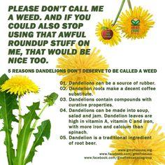 I always knew dandelions weren't a weed! ;)