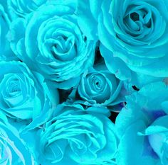 Light Blue Roses are a must in the wedding bouquets as blue will definitely be one of my colours. Blue symbolizes mystery with no set of expectations, something like that of an open page. Neutral Wedding Flowers, Vintage Wedding Flowers, Hyacinth Flowers, Blue Flowers, Light Blue Roses, Flowery Wallpaper, Flower Meanings, Blossom Flower, Turquoise Color