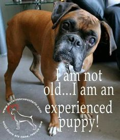 Boy is that the truth! #BoxerDog