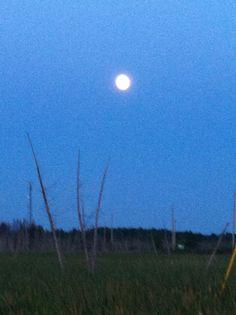 Big moon Big Moon, Celestial, Sunset, Outdoor, Outdoors, Sunsets, Outdoor Games, Outdoor Living