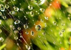 Close up of dew on spider web