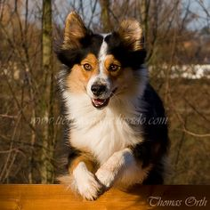 Agility Agility Training, Winter, Corgi, Animals, Emotional Photography, Winter Time, Corgis, Animales, Animaux