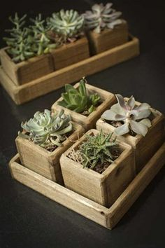 Set of Wooden Cup Planters in Wooden Tray - Mothology.com - or DIY!
