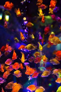 Oh my goodness. I can't get enough of all these bright colorful fish. Rainbow sea life!