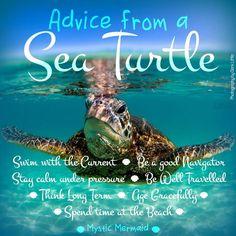 Advice From A Sea Turtle - Credit Advice - Ideas of Credit Advice - photo credit: Clark Little Photography Turtle Spirit Animal, Animal Spirit Guides, Baby Sea Turtles, Cute Turtles, Ocean Quotes, Beach Quotes, Water Quotes, Turtle Symbolism, Clark Little Photography