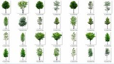 COLLECTION OF TREES with transparent background [PNG] - arq + resources