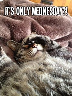 It's Only Wednesday wednesday hump day wednesday quotes happy wednesday wednesday quote Wednesday Hump Day, Happy Wednesday Quotes, Wednesday Humor, Wacky Wednesday, Its Friday Quotes, Wednesday Greetings, Happy Friday, Thursday, Blessed Wednesday