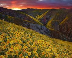 Carrizo Plain, San Luis Obispo, California
