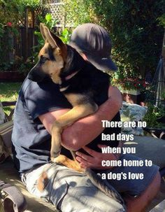 So DogGone Funny!: There are no bad days when you come home to a dog's love Funny Animal Memes, Dog Memes, Cute Funny Animals, Funny Dogs, Funny Dog Pictures, Animal Pictures, I Love Dogs, Cute Dogs, German Shepherd Puppies