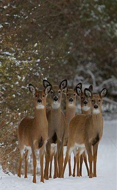 Deer via Lilly Jordan