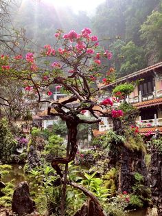 Sam Poh Tong Temple, Ipoh, Malaysia — by Meandering Family. Just 5kms from the city of Ipoh in Malaysia's state of Perak, you'll find picturesque limestone mountains dotted with...