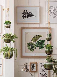 Entdecken Sie den Wohntrend Urban Jungle auf kika.at Gallery Wall, Frame, Plants, Handmade, Home Decor, Green And Brown, Picture Frame, Hand Made, Decoration Home