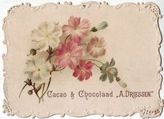 chromo cacao driessen - flower spray of pink and white flowers with embossed and cut-out borders