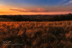 Tuscany sunset by blazblue78 #Landscapes #Landscapephotography #Nature #Travel #photography #pictureoftheday #photooftheday #photooftheweek #trending #trendingnow #picoftheday #picoftheweek