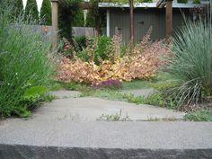 Banyon Tree Design Studio Garden Heuchera