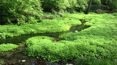 Gentle Stream 11 hours - Gentle Rivers & Streams, nature sound, relaxing...