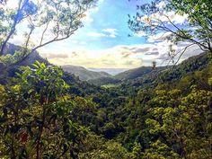 Kondalilla National Park Queensland Australia ☁️ #nature #photography #australia #spring #nationalpark