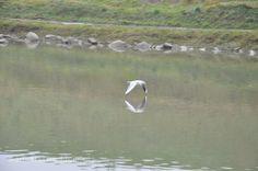 #tern #wislok #river in #poland #rzeszow