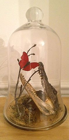 Taxidermy species in Large Glass Bell Jar Dome by SowaStreet