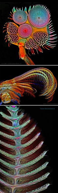 Science Discover The Extraordinary Details of Tiny Creatures Captured with a Laser-Scanning Microscope by Igor Siwanowicz Patterns In Nature, Textures Patterns, Macro Fotografie, Foto Macro, Macro Photo, Micro Photography, Stunning Photography, Biology Art, Microscopic Photography
