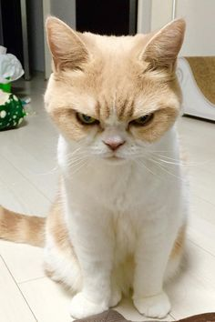 This Japanese Grumpy Cat Will Be Your New Spirit Animal