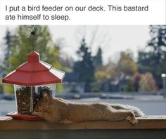 22 Funny Animal Pics for Your Friday | Love Cute Animals
