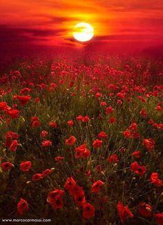 Coucher de soleil sur un champs de fleurs