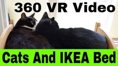 Vr 360 funny cats – cats testing their ikea doll beds - vr 360 cats - Funny Cat Jokes, Funny Cats And Dogs, Funny Cat Videos, Funny Cat Pictures, Cat Videos For Kids, Cat And Dog Videos, Ikea Doll Bed, Doll Beds, Youtube Cats