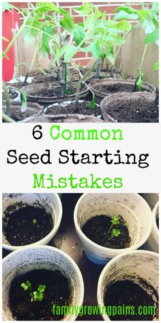 Family Growing Pains Practical Homesteading and Saving Money Advice Fall Vegetables, Growing Vegetables, Growing Plants, Gardening Vegetables, Veggies, Gardening For Beginners, Gardening Tips, Growing Tomatoes In Containers, Starting Seeds Indoors