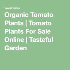 Organic Tomato Plants   Tomato Plants For Sale Online   Tasteful Garden