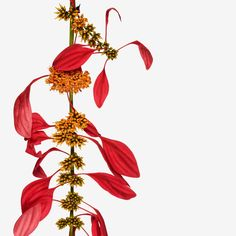 120313FL_fairchild_botanical_551.jpg (2000×2000)