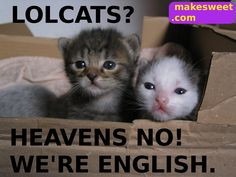 Your Sunday LOLcats (dial-up warning) BYO LOLs Edition ...