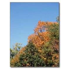 Trees of Autumn Postcards