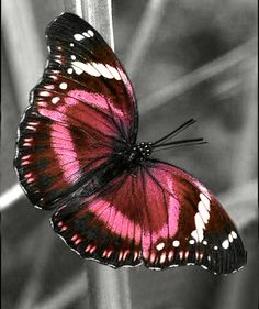 Butterfly Effect, Float Like A Butterfly, Butterfly Kisses, Butterfly Painting, Butterfly Wallpaper, Butterfly Wings, Beautiful Bugs, Beautiful Butterflies, Amazing Nature