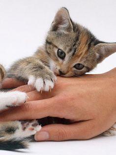 Pick the purrrfect #kitten. Get it? #pets