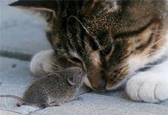 casse-dalle dans gourmandises felines chat-et-souris