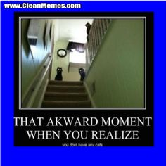 funny cat memes clean - Google Search